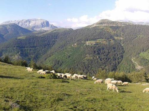 Cañada / Altxunbide 1